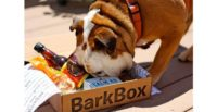 Barkbox Dog Toys, Treats & Gifts Every Month